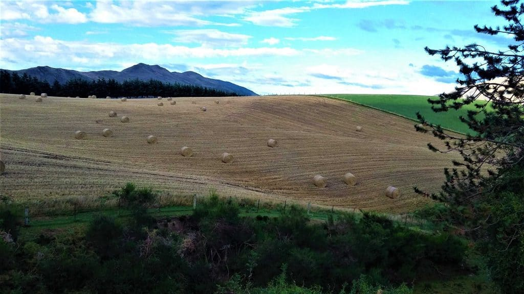 Harvested paddock dotted with straw bales.