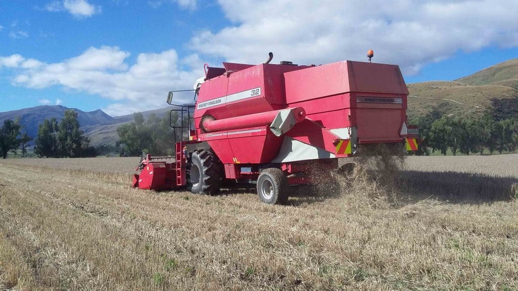 A red Massey Ferguson Combine harvesting grain.