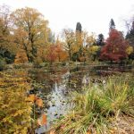 Queenstown Garden pond with autumn trees.