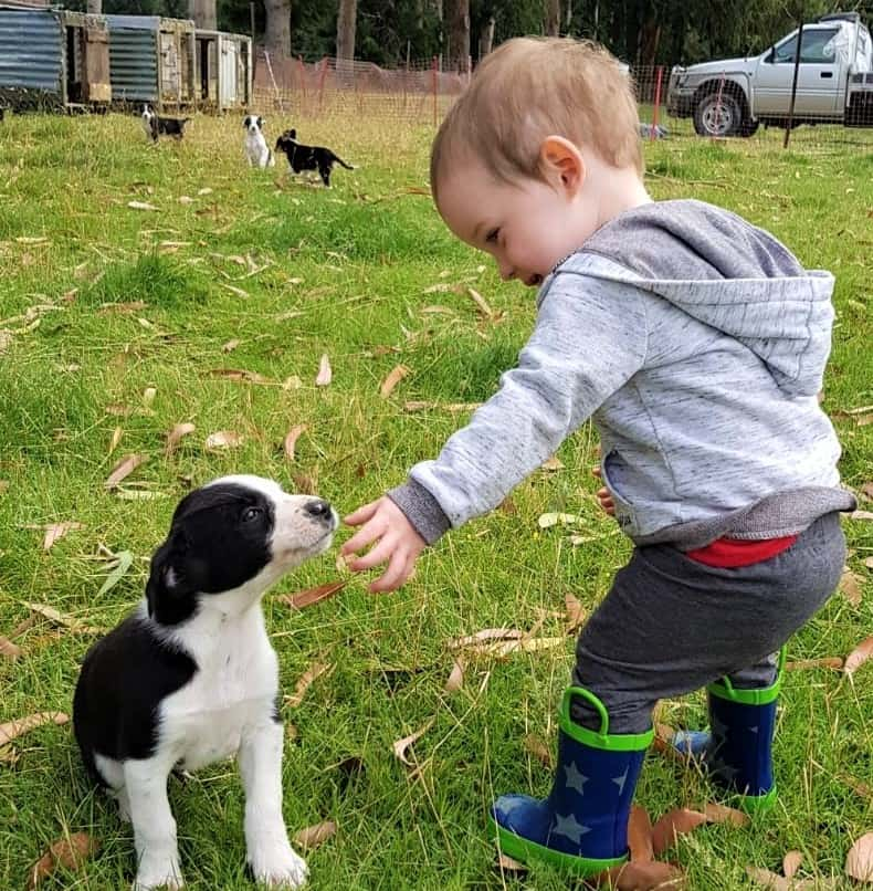 Puppy and toddler on the farm.