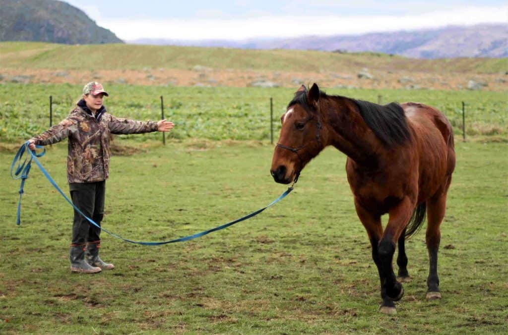 A Southern Girl lunging a horse.