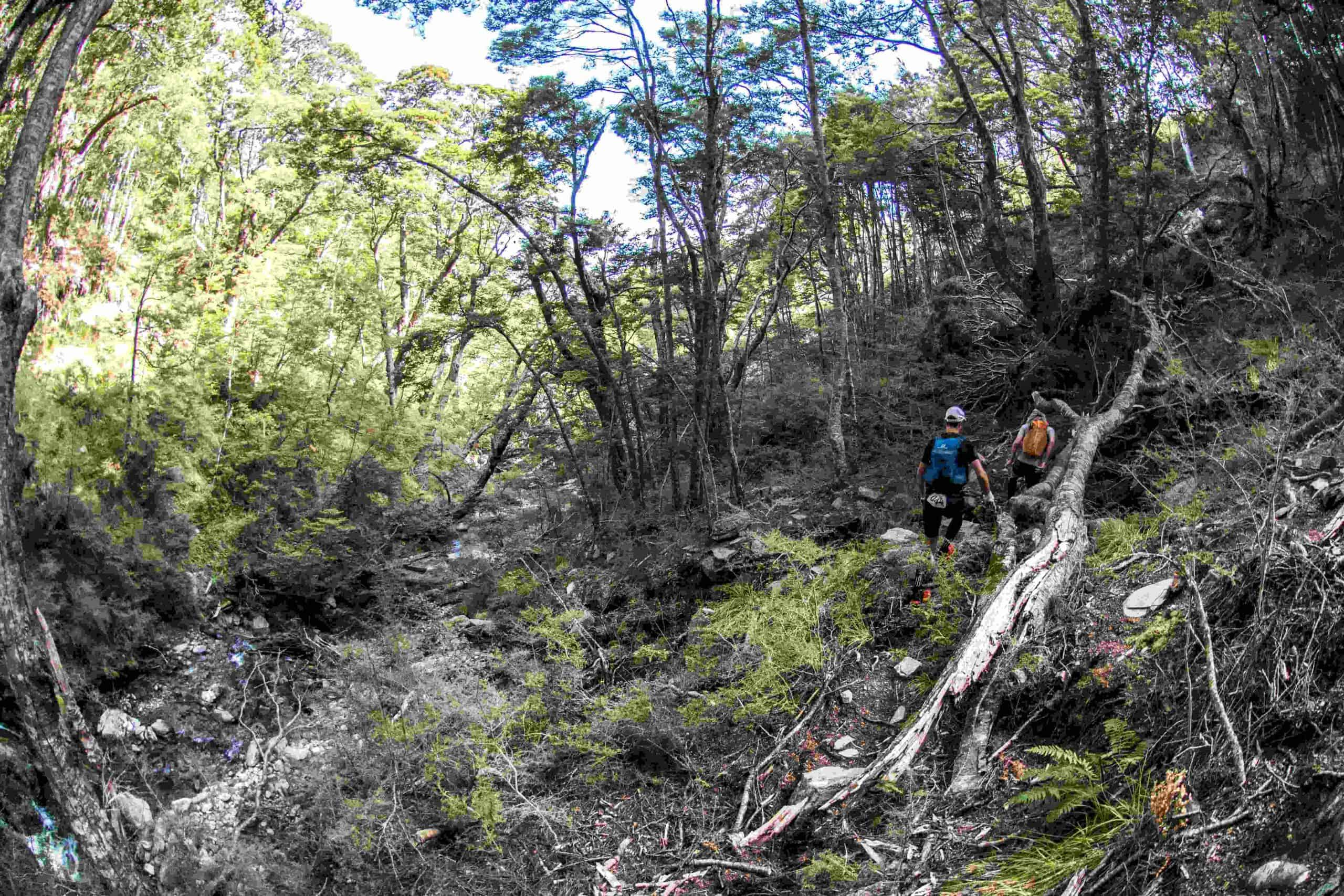 Two Revenant racers clamber over logs in the beech forest beside the rocky Nokomai River bed.