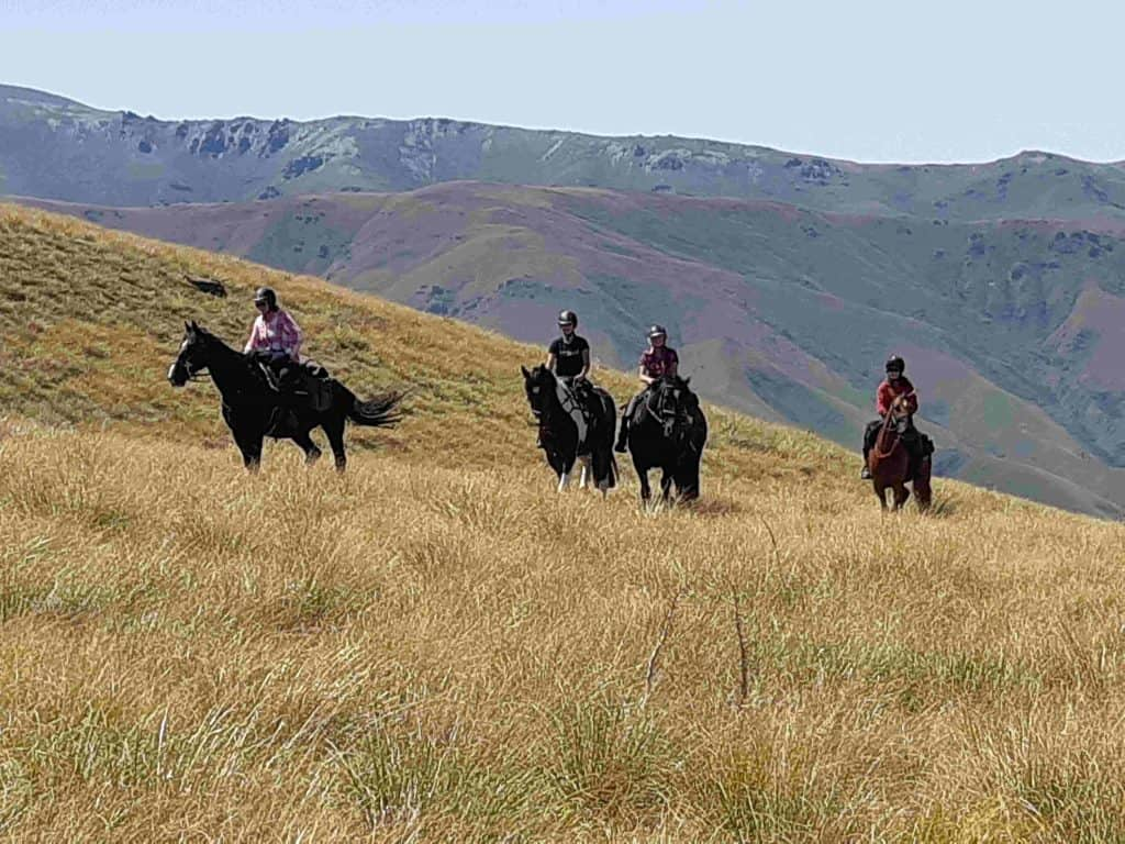 Four horses and riders pause on the tussock-covered hillside. They, too, have been roaming around to check on runners out on the course.